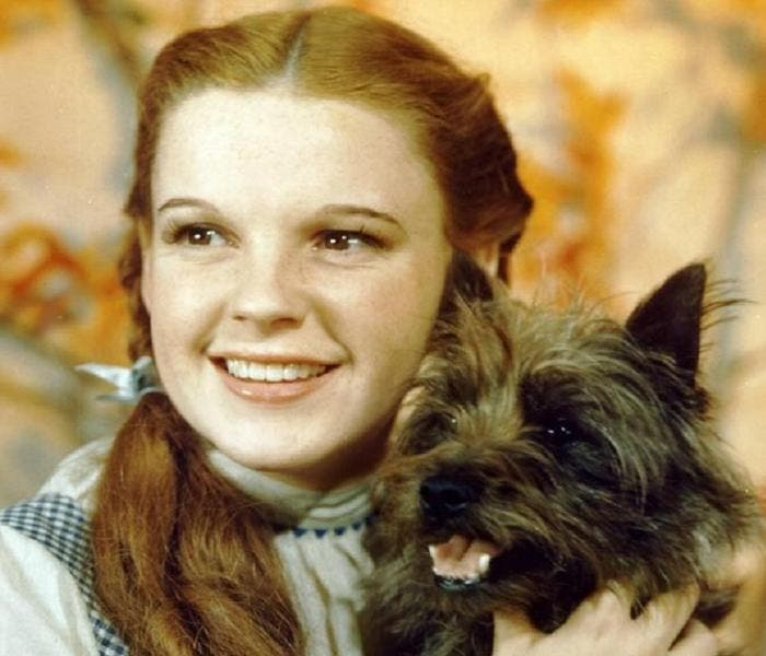 "Filme será inspirado no livro ""Toto: The Dog-Gone Amazing Story of the Wizard of Oz"""