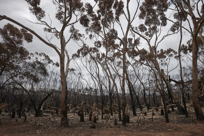 Incêndios na Austrália - Christina Simons/The New York Times