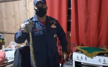 Cobra de 2 metros é encontrada dentro de casa no Norte de SC